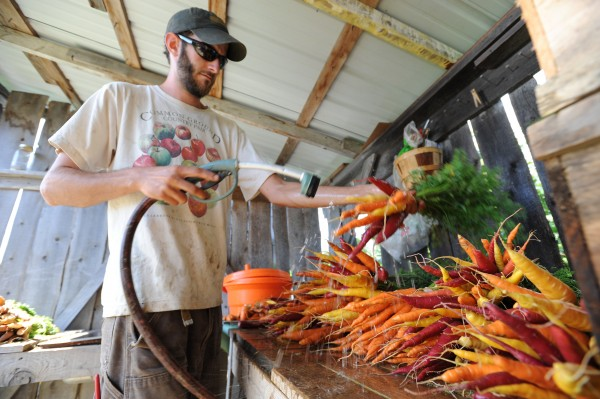 Brian St. Laurent washes carrot bunches at the Maine Organic Farmers and Growers Association farm in Unity on Wednesday, Aug. 24, 2011. St. Laurent and his partner, Holli Cederholm, share duties on the farm for two years then pass the privilege on to new farmers to try their hand at organic farming. The pair were anxious on Wednesday as they were expecting an organic inspection that day.