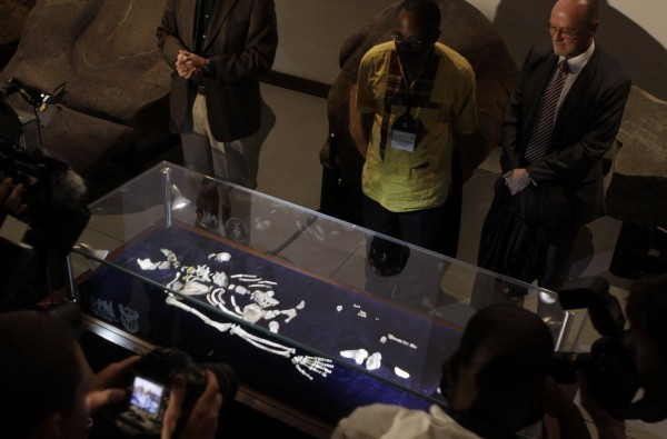 One of two sets of bones from Australopithecus sediba, found in South Africa, are unveiled at the University of the Witwatersrand in Johannesburg, Thursday, Sept. 8, 2011.