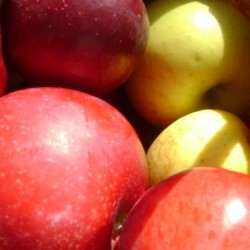 May frosts hurt apple crop in New England