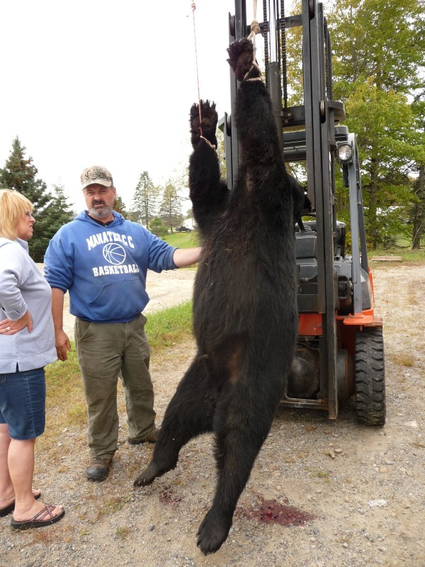 Puckerbrush Guide Service guide Wayne Gatcomb (center) stands next to the bear that bit Paul Lyndon McFalls in Marion Township Thursday, Sept. 29, 2011.