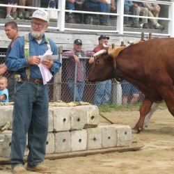 Blue Hill Fair kicks off Thursday with traditional events, 'Idol' competition