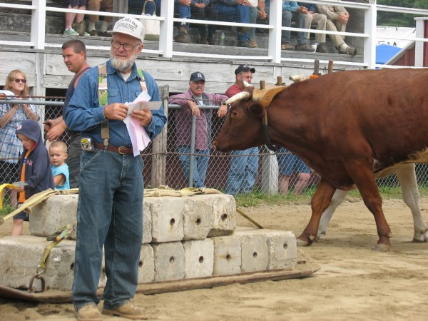 Bruce Bryant, an official with the Blue Hill Fair livestock pulling competition, holds ribbons on Saturday, Sept. 3, 2011, as a team of oxen parades behind him. The livestock competition is one of several events being held this weekend at the fair, which is held each year during Labor Day weekend.