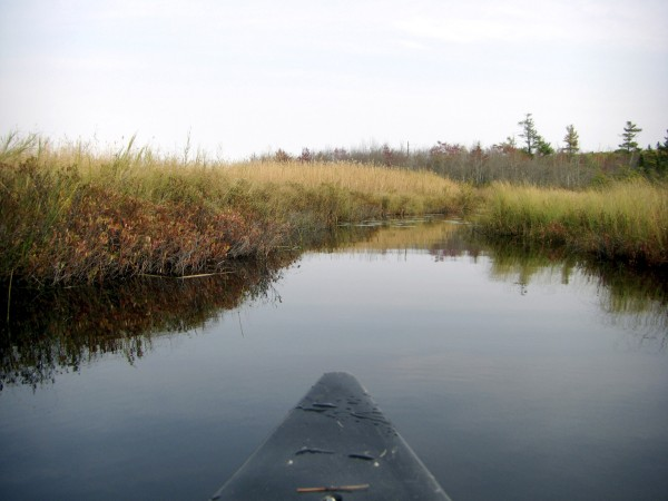 A guided paddle of Sheepscot Bog in Palermo will be held 10 a.m.-12:30 p.m. Saturday, Oct. 1.