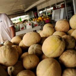 Listeria-tainted cantaloupes now deadliest poisoning in dozen years