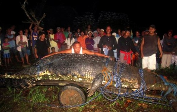 Mayor Cox Elorde of Bunawan township, Agusan del Sur Province, pretends to measure a huge crocodile which was captured by residents and crocodile farm staff along a creek in Bunawan late Saturday in southern Philippines.