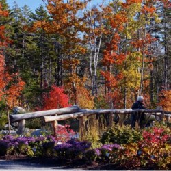Southernmost Maine holds last views of foliage color