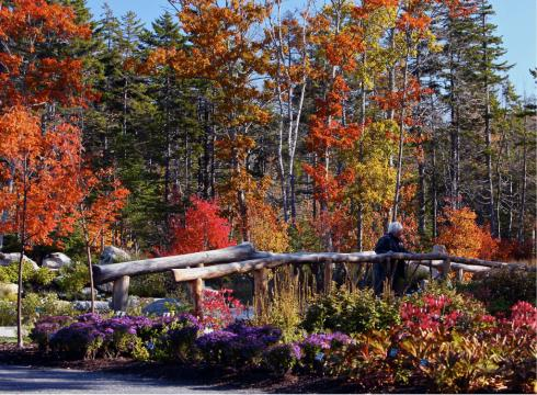 The Coastal Maine Botanical Gardens features a natural wooden bridge in the Lerner Garden of the Five Senses during fall foliage at the Coastal Maine Botanical Gardens in Boothbay, Maine