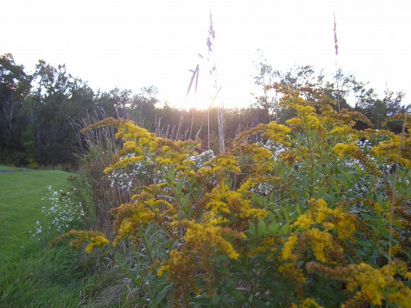 September sunset and goldenrod in Unity