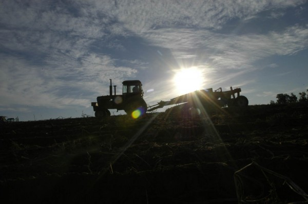 A harvester works the  potato fields in Caribou in this file photo. Officials with the Maine Potato Board are saying this year's crop looks good despite less than ideal weather conditions.