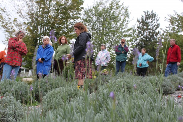 Lorie Costigan (center), co-owner of Glendarragh Lavender Farm in Appleton, shows the Belfast Garden Club how to prune lavender plants in the fall on Sept. 20.