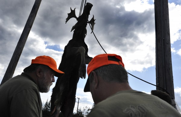 Hunters gather around a dead moose as is weighed at the Gateway Variety tagging station in Ashland on Monday, Sept. 26, 2011.  Monday was the first day of Maine's moose hunting season.
