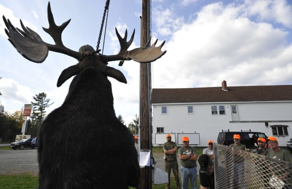 Hunters and tagging officials look over a moose as it is weighed at the Gateway Variety tagging station in Ashland on the first day of moose hunting season Monday, Sept. 26, 2011.