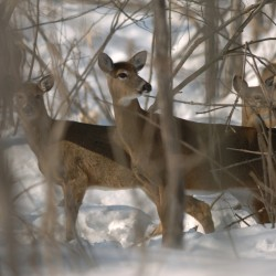 Maine sees drop in number of out-of-state hunters