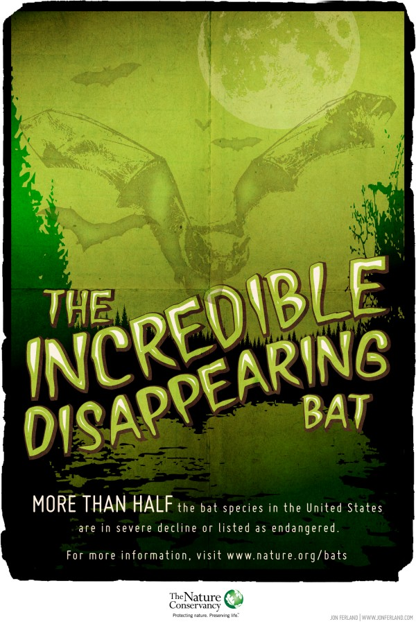 The Incredible Disappearing Bat
