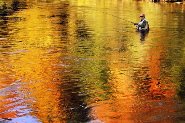 Autumn's colors are reflected in the water as Art McEvoy, of Portland, wades in pursuit of salmon at Grand Lake Stream. McEvoy's son, Jeff McEvoy, owns Weatherby's resort, one of several camps catering to sportsmen in the village of Grand Lake Stream.