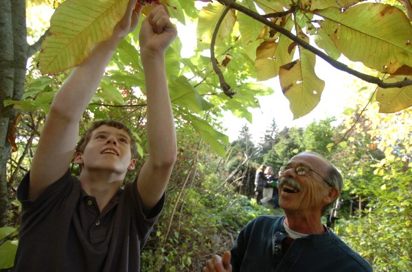 Matthew Nichols (left), a Hermon Middle School seventh-grader, looks over parts of an umbrella magnolia, with Armand O'Clair, caretaker of Ecotat Garden and Arboretum in Hermon. Ever since he was two and working in the family garden with his grandmother, Nichols has had an interest in botany.