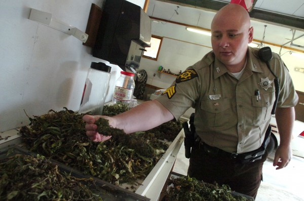 On Friday, October 14, 2011, Sgt. Jon Carson of the Penobscot County Sheriff's Department shows a marijuana bud which is part of the two to three pounds of marijuana confiscated from a Orrington camper on Thursday morning.