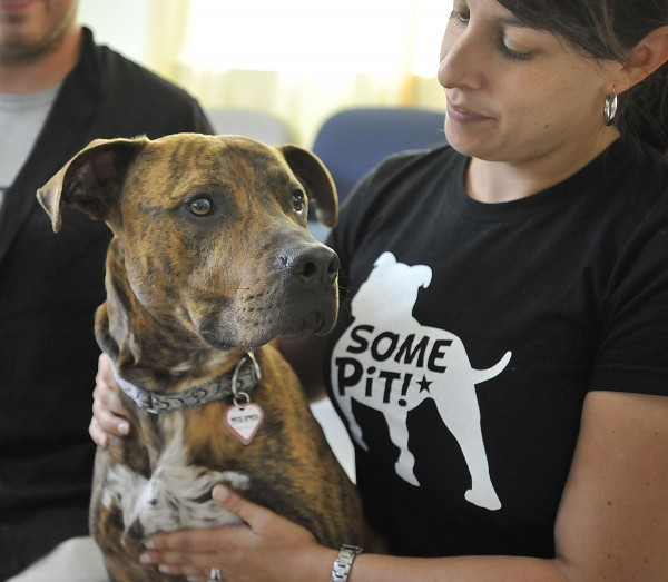 Southern Maine Pit Bulls educator Jessica Dolce shows off &quotJack&quot a 3-year-old neutered male Pitbull at the Bangor Humane Society, Saturday, July 17, 2010.