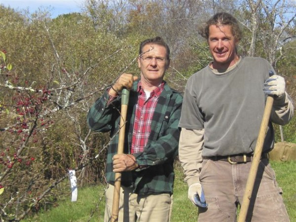George Fowler (left) and Jamie Metcalfe donated time and materials to plant crab apple trees on the Vose Library grounds in Union. Four flowering crab apple trees were planted Oct. 17 in what became a community effort. The library's landscape adviser, Sherry Cobb, arranged for a donation of the trees through Maine Forest Service's Project Canopy from Dutton's Greenhouse and Nursery in Morrill, which was going out of business. The trees were transported to the library by the town of Union, along with deciduous trees which were planted on the Common. Metcalfe of Union Stone dug holes with his excavator and brought gravel to lighten the clay soil. Compost donated by Fowler of Union and peat moss donated by Union Agway further enriched the soil. After Metcalfe and Fowler had planted the trees, Fowler pruned them. The bare soil was covered with bark mulch donated by Herb and Vicki Harriman of Come Spring Farm and Sawmill.
