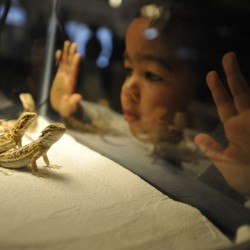 Reptile show draws hundreds of herpetologists to Bangor Motor Inn