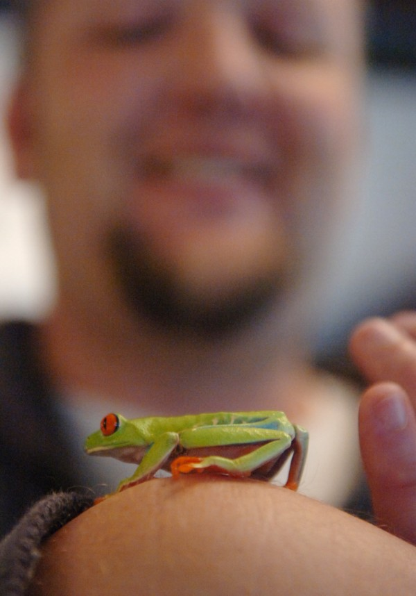 Event organizer Chris MacMillan of Searsport gently holds a tree frog while manning his family's booth at the Northeast Reptile Expo at the Bangor Motor Inn Sunday, Oct. 16, 2011.