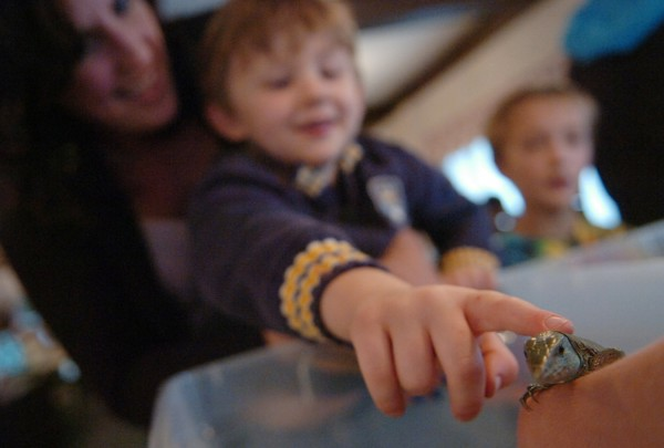 Held by his mother Amber Carrier, a curious three-year-old Miles Nicholas Carrier of Gray touches an Ameiva lizard, a genus of lizard commonly called a jungle-runner, while visiting the Northeast Reptile Expo at the Bangor Motor Inn Sunday, Oct. 16, 2011.