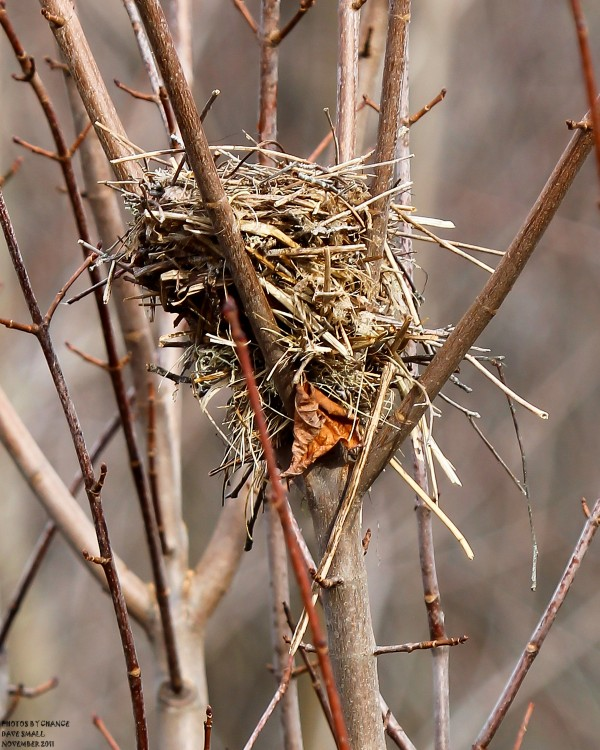 A bird nest sits in a tree that has lost its leaves.