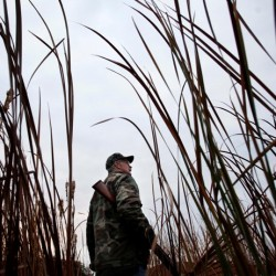 Waterfowl hunters warned of high mercury levels