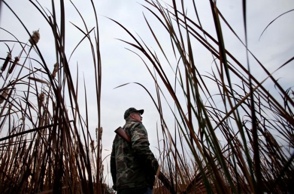 Tall reeds on the shore of the Kennebec River help to conceal duck hunter Andy Guerette.