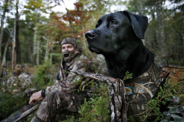 Gauge, a Labrador retriever, wears a camouflage vest while watching for ducks with his master, Jeremy Lee, of South China, while duck hunting in Bath.