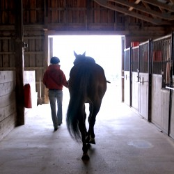 'Retired' racehorses take new lessons, excel