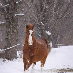 Horses adapt well to winter weather