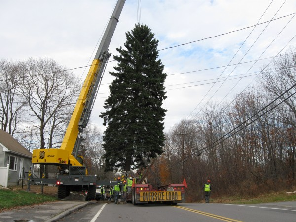 A 55-foot blue spruce is lifted from the South Portland yard of Allan and Lori Huff Thursday morning, to be moved to Monument Square in downtown Portland, where it will serve as this year's Christmas tree.