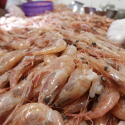 Shrimp industry gets cold shoulder
