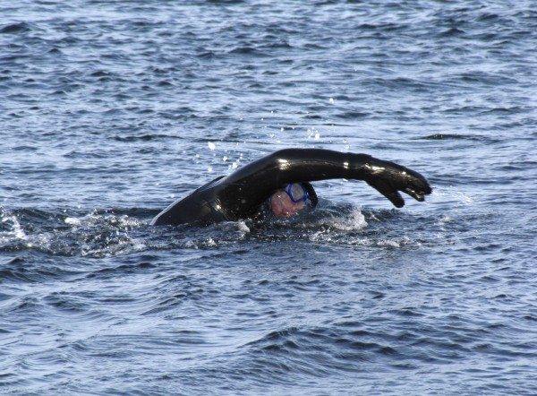 Gary Sredzienski, 49, of Kittery is seen swimming in an undated photo. Sredzienski, who is a winter swimmer, will swim from Owls Head Lighthouse to Rockland Breakwater Lighthouse and back to shore, a total of 3.3 miles, on Dec. 10. His swim is to raise funds for lighthouses.