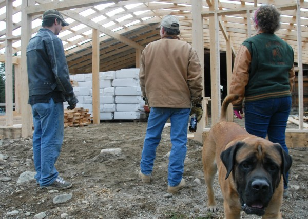 Volunteers at K.D. Stable plus Diesel the English Mastiff look over the barn they are building at the Lee horse-rescue farm on Saturday, Nov. 12, 2011.