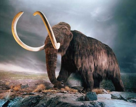 Beginning around 50,000 years ago, in the depths of Earth's most recent ice age, Eurasia and North America lost substantial numbers of large-bodied mammal species, including woolly mammoths.