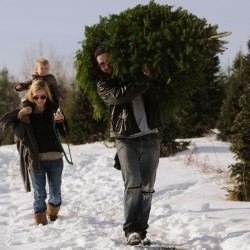 Christmas tree sales holding steady