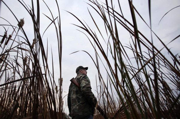 Tall reeds on the shore of the Kennebec River help to conceal duck hunter Andy Guerette in October.