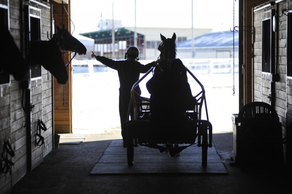 Tricia Coyle of Hermon gives 7-year-old Standardbred Casino King an affectionate tap as she leaves Fred Nichols Barn with Alley, a 2-year-old female Standardbred, earlier this year.