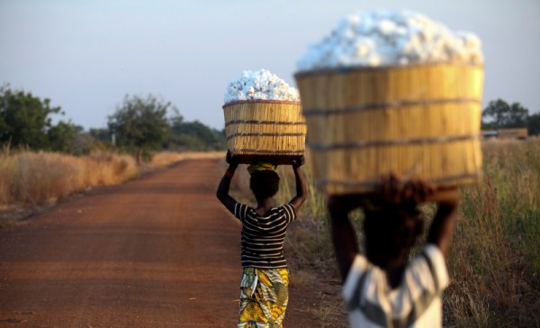 Thirteen-year-old Clarisse Kambire (left) and a fellow child laborer carry wicker baskets full of hand-picked fair-trade organic cotton back to the farmer's store house after a day's labor in fields near Benvar, Burkina Faso.