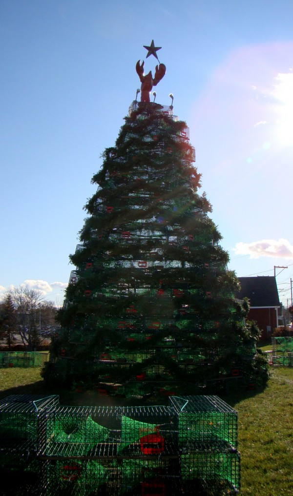 In Rockland, the lobster trap Christmas tree this year is 30 feet tall and topped with an illuminated lobster.