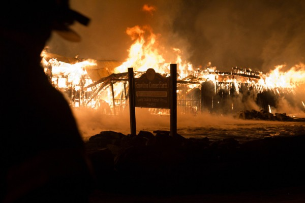 Firefighters found the barn at Knowlton Corner Farm in Farmington fully engulfed when they arrived at about 4 a.m. Thursday.