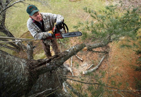 Bob Doyle, 71, cuts a limb while working his way up an 80-foot-tall white pine he removed in Winthrop on Dec. 14. A photo made from a similar angle showed Doyle's son working on the ground below, giving it a better perspective of being in a tree.