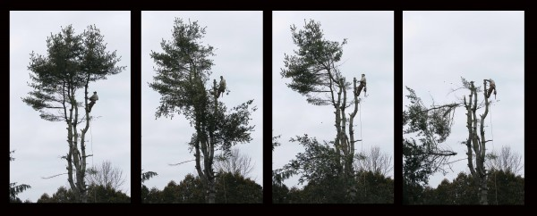 This time-lapse set of photos shows treetops toppling around Bob Doyle, 71, as he works on removing a white pine in Winthrop on Dec. 14. You can only use so many photos of the man cutting tree limbs. I felt a different, single photo showing Doyle reaching out to cut a limb a few minutes earlier probably told the story of what he does better than this series.