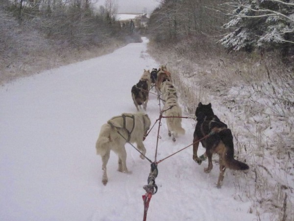 A team of sled dogs trains along a snow-covered back road in Fort Kent Wednesday afternoon after the area received about 2 inches of snow between Tuesday and Wednesday. The National Weather Service issued a winter storm warning for much of the state with up to 10 inches more expected to fall on the St. John Valley late Wednesday night into Thursday afternoon.
