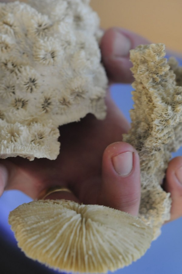 Christian Carlson, a technician at Unity College with a longtime fascination with corals, displays several coral skeletons at the college on Saturday, Dec. 3, 2011.