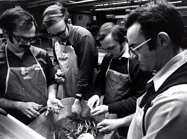 Peter Bourque, a longtime biologist with the Maine Department of Inland Fisheries and Wildlife, clips fins to mark fish with DIF&W colleagues in this photo taken in the early 1970s. Shown are Dennis McNeish (left), Bourque, Forrest Bonney and Steve Timpano. Bourque retired in October after more than 46 years with the department.