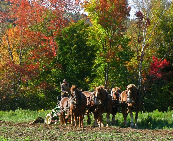 Matt Gregg takes a team of six horses out to the back forty to plow. Plowing is one of the most strenuous types of work horses do. The Greggs mostly use tractors for plowing, but this borrowed Amish plow gives the horses a chance for some exercise.