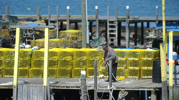 Shaun Lemonie's uncle, Norman Burns, untangles rope on the family wharf used by Swan's Island lobster fisherman Lemoine in May 2010.